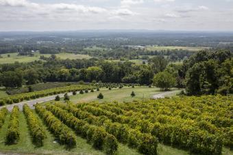 Best Virginia Wineries to Visit