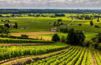 Guide to Visiting Bordeaux Wine Cellars