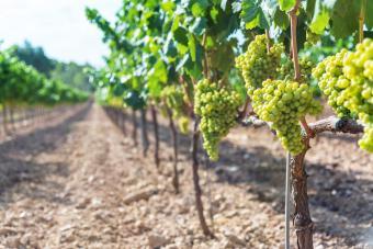 Renault Winery Resort & Golf Visitor Guide