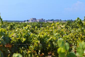 Tips for Taking Puglia Wine Tours