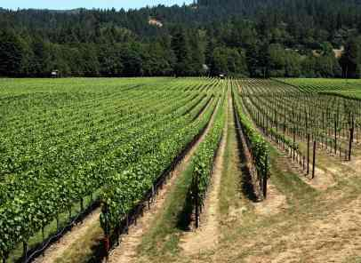 Russian River Valley Wines