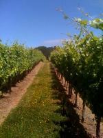 Oregon's Deux Vert Vineyard