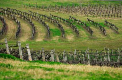 New South Wales, Australia vineyards