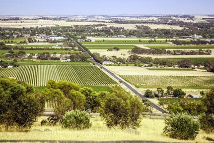 Vineyards in Barossa Valley, Australia