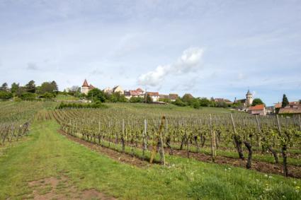 Vineyards in Alsace; © Gpahas | Dreamstime.com