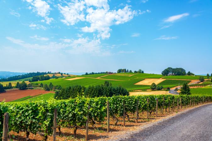 Vineyards in Oregon's Willamette Valley