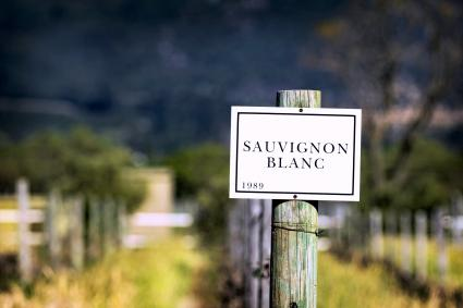 Sauvignon Blanc Sign at Vineyard in Franschhoek, South Africa