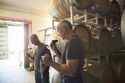 Vintners smelling and tasting red wine in winery barrel room