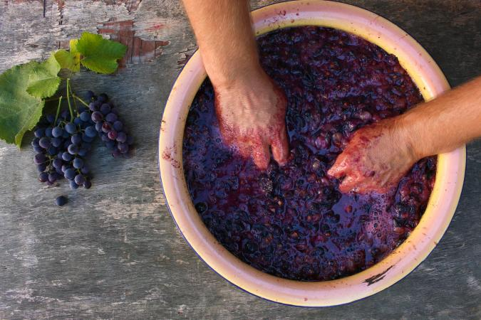 crushing grapes for homemade wine