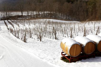 Snow-covered landscape with vines and barrels